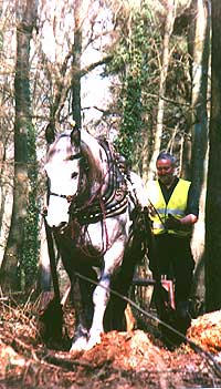 horse logging with a working horse