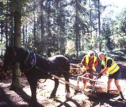 horse logging training